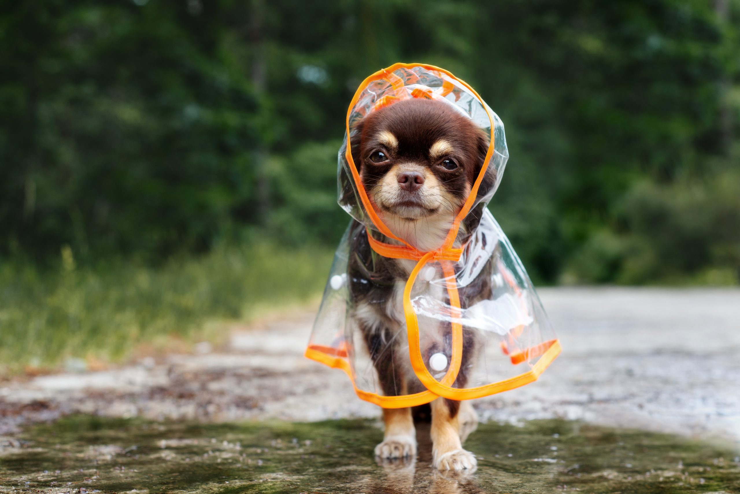 Preparing Your Dog for Rainy Days