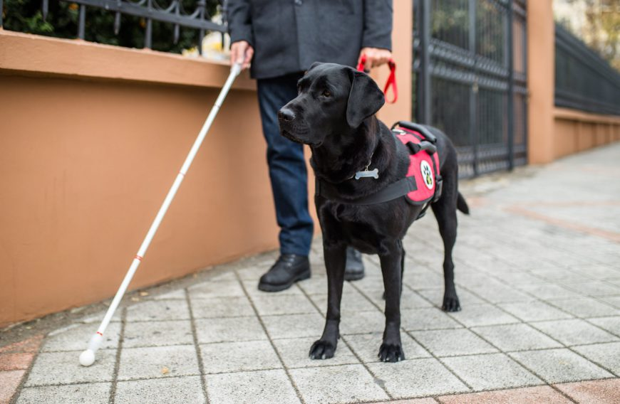 Jobs for Dogs - Service Dog