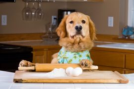 What Human Foods are Toxic to Dogs?