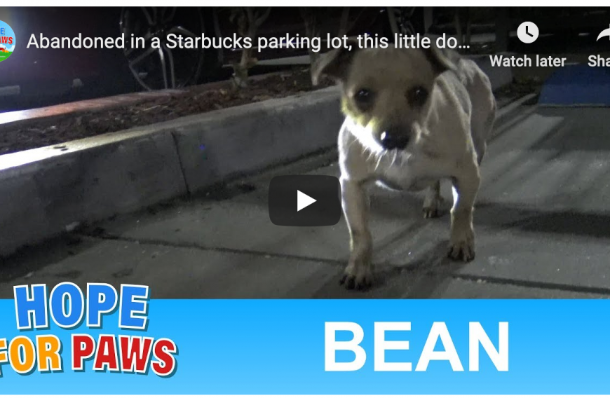 Dog Rescued at Starbucks
