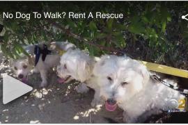 Rent a Rescue