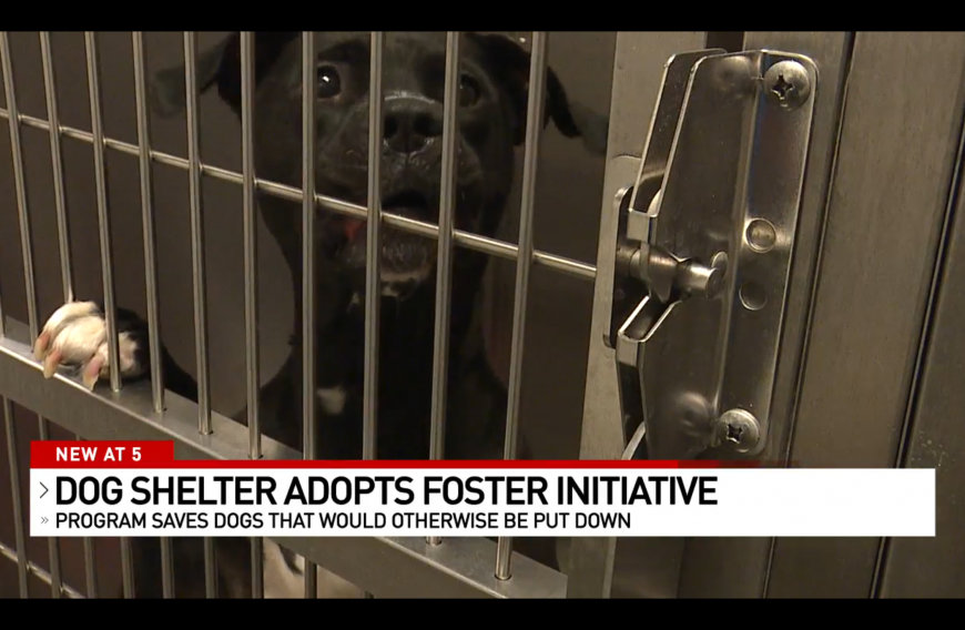 New Foster Dog Program for Special Needs Dogs