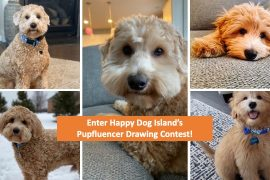 Enter the Pupfluencer Drawing Contest
