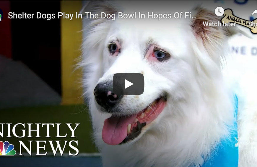Watch Dog Bowl III to Support Animal Rescue