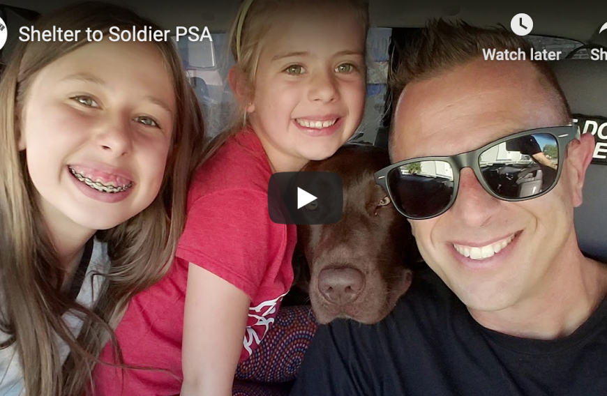 Shelter to Soldier Non-Profit Organization Connecting Trained Rescue Dogs to Post 9/11 Combat Veterans