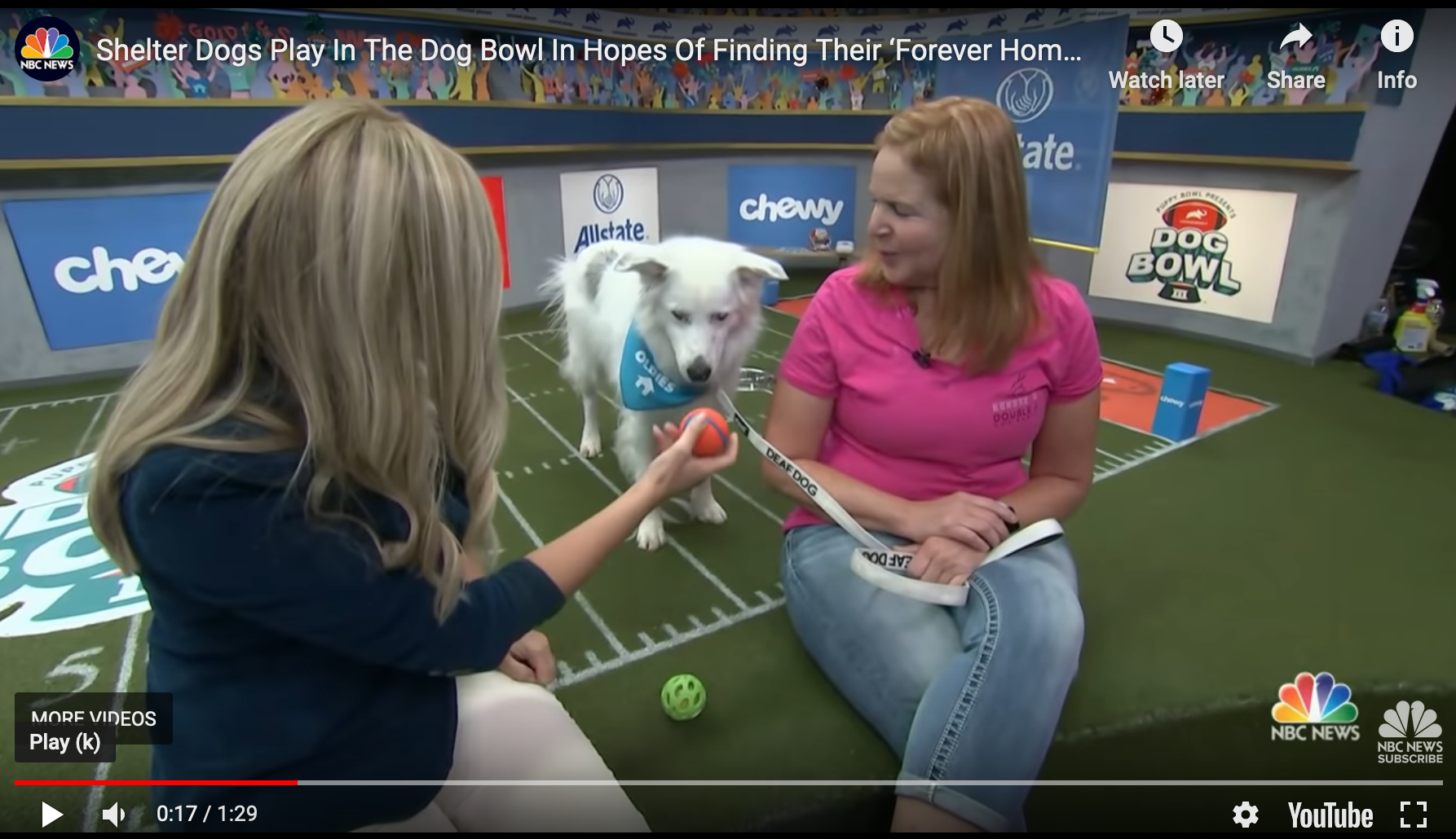 Dog Bowl III to Support Animal Adoption