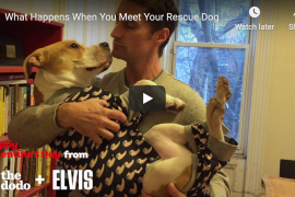 Rescue Dogs Meet Their Rescue Humans