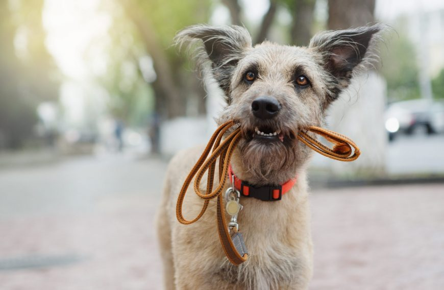 What Dog Accessories Do I Need to Buy?