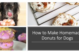 How to Make Donuts for Dogs