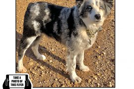 Bring Jackson Home - The Australian Shepherd Has Been Found