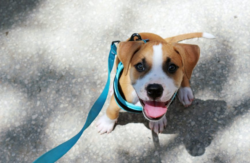 Leash Training Tips for Your Dog
