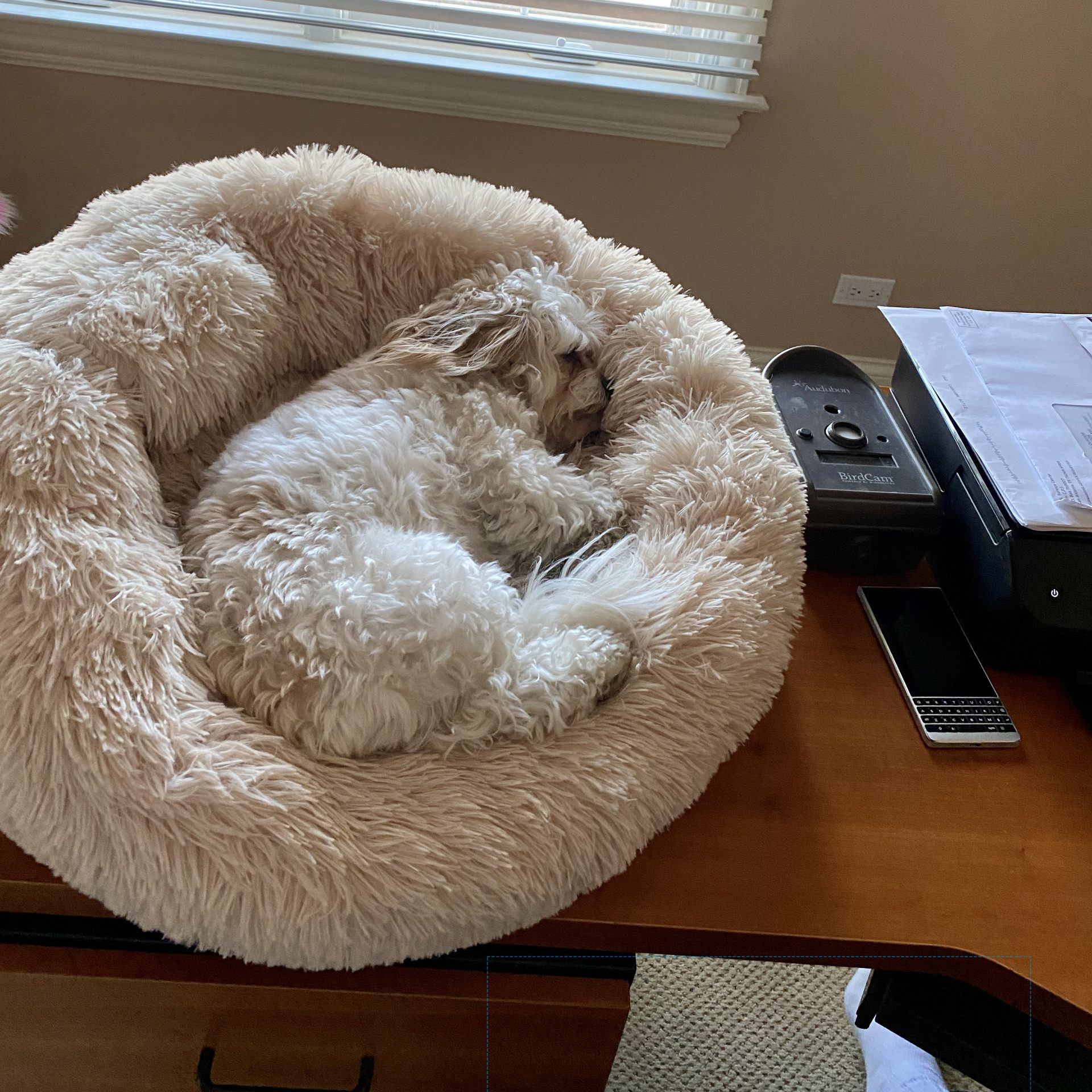 Dog Enjoying a Soothing Dog Bed