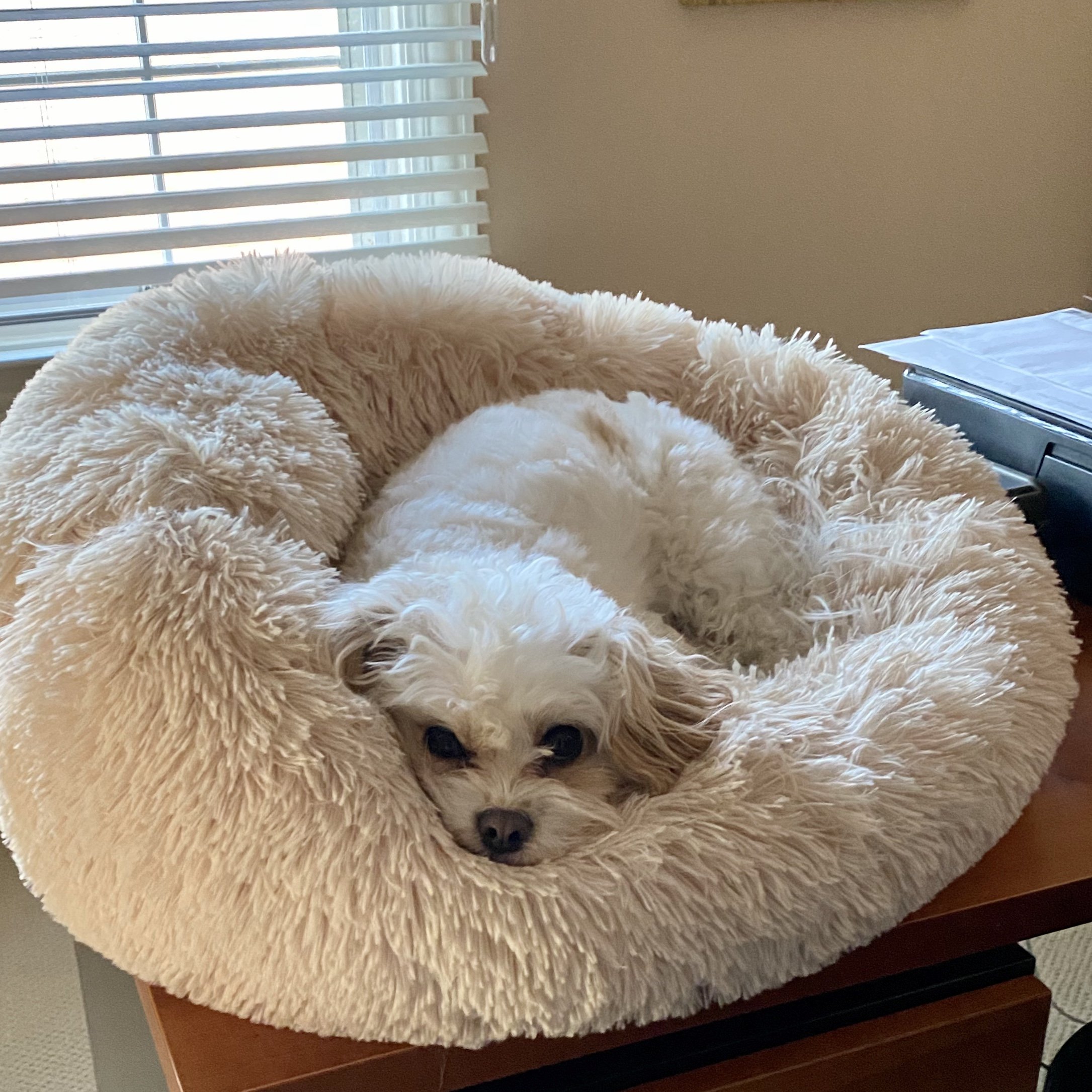 Anti-Anxiety Soothing Bed for Dogs
