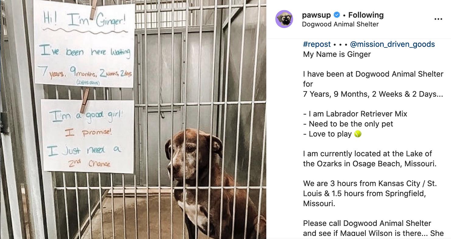 Ellen Dengeres' Pet-Lovers Instagram Account Shares the Story'