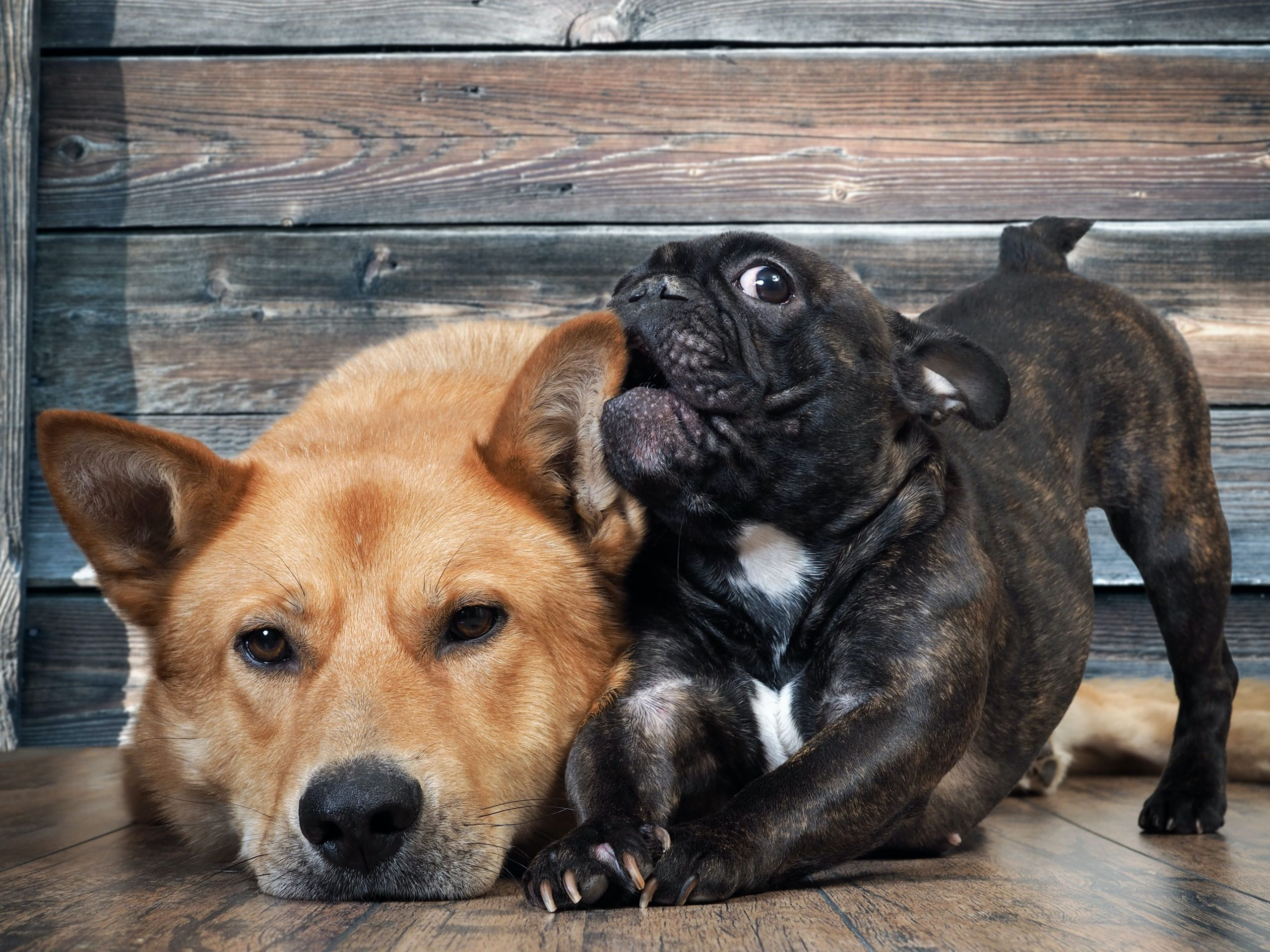 Dog Socialization Tips