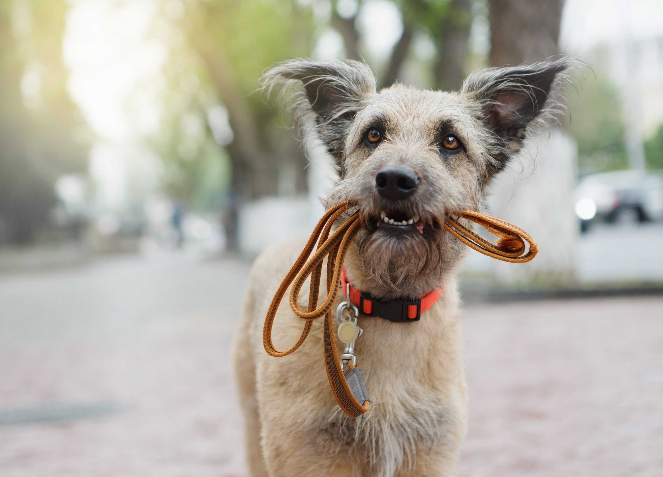 What Dog Accessories Do I Need to Buy