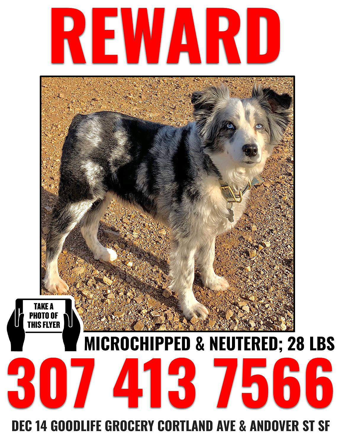 Missing Dog Has Been Found