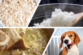 Healthy Homemade Chicken and Rice Treats for Dogs