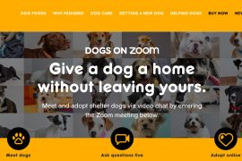 Dog Adoption through Zoom by Pedigree