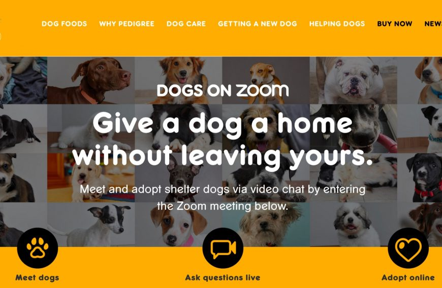 Dog Adoption through Zoom by Pedigree