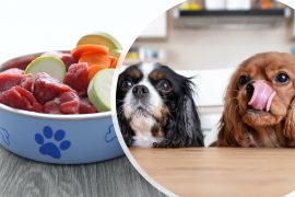 How to Make Healthy Homemade Dog Food
