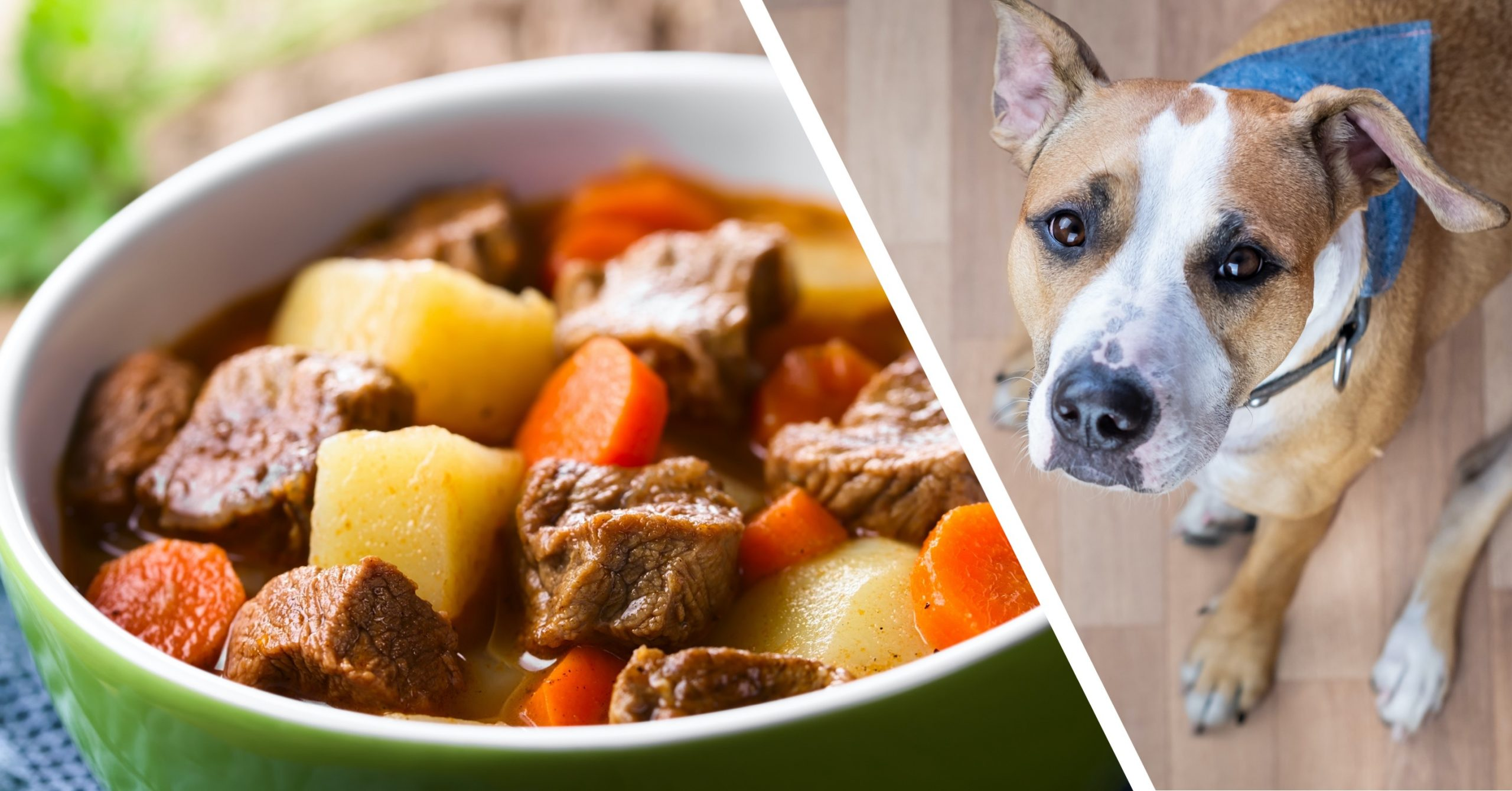 Homemade Beef Stew for Dogs