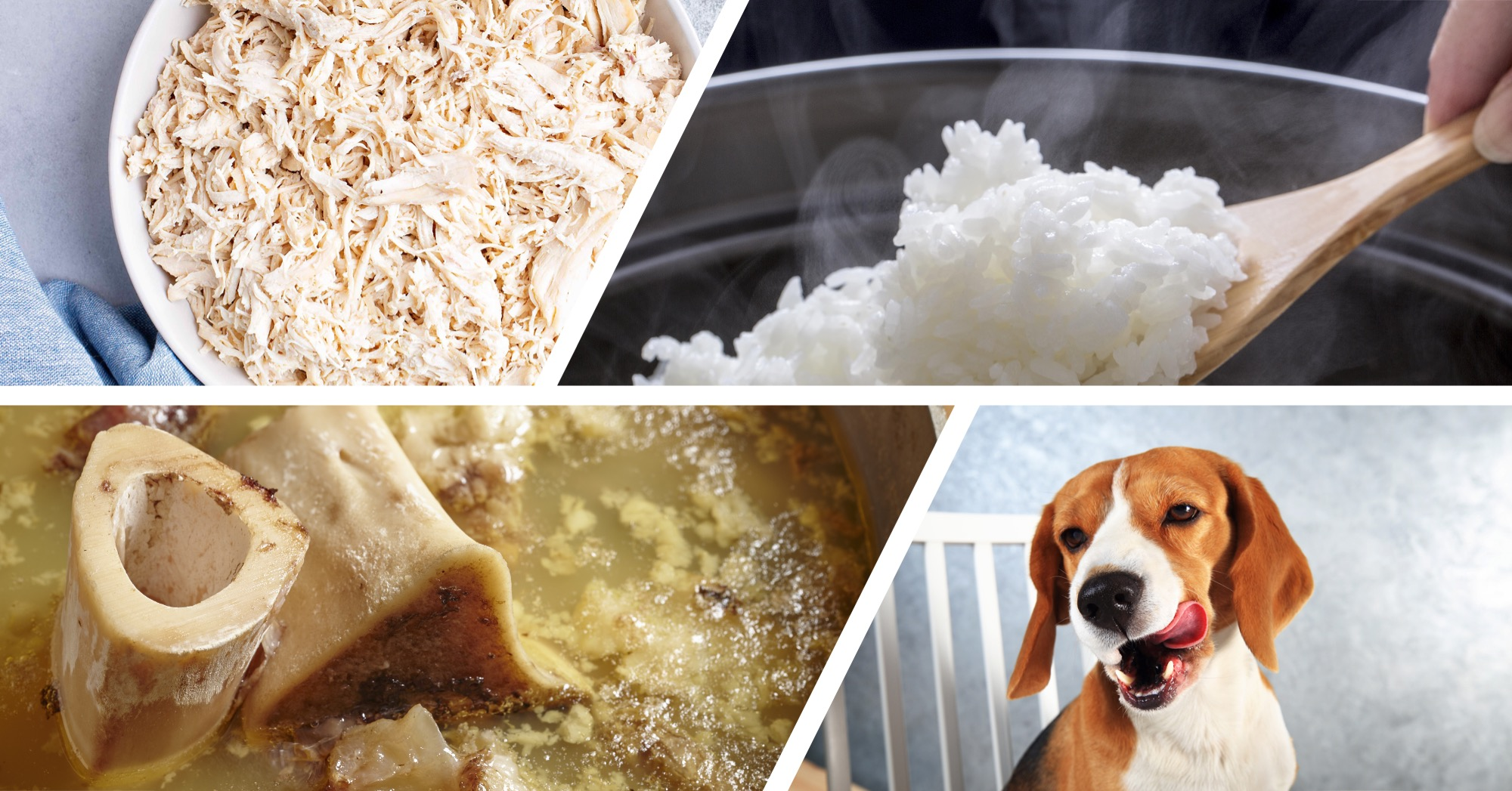Homemade Chicken and Rice Treats for Dogs