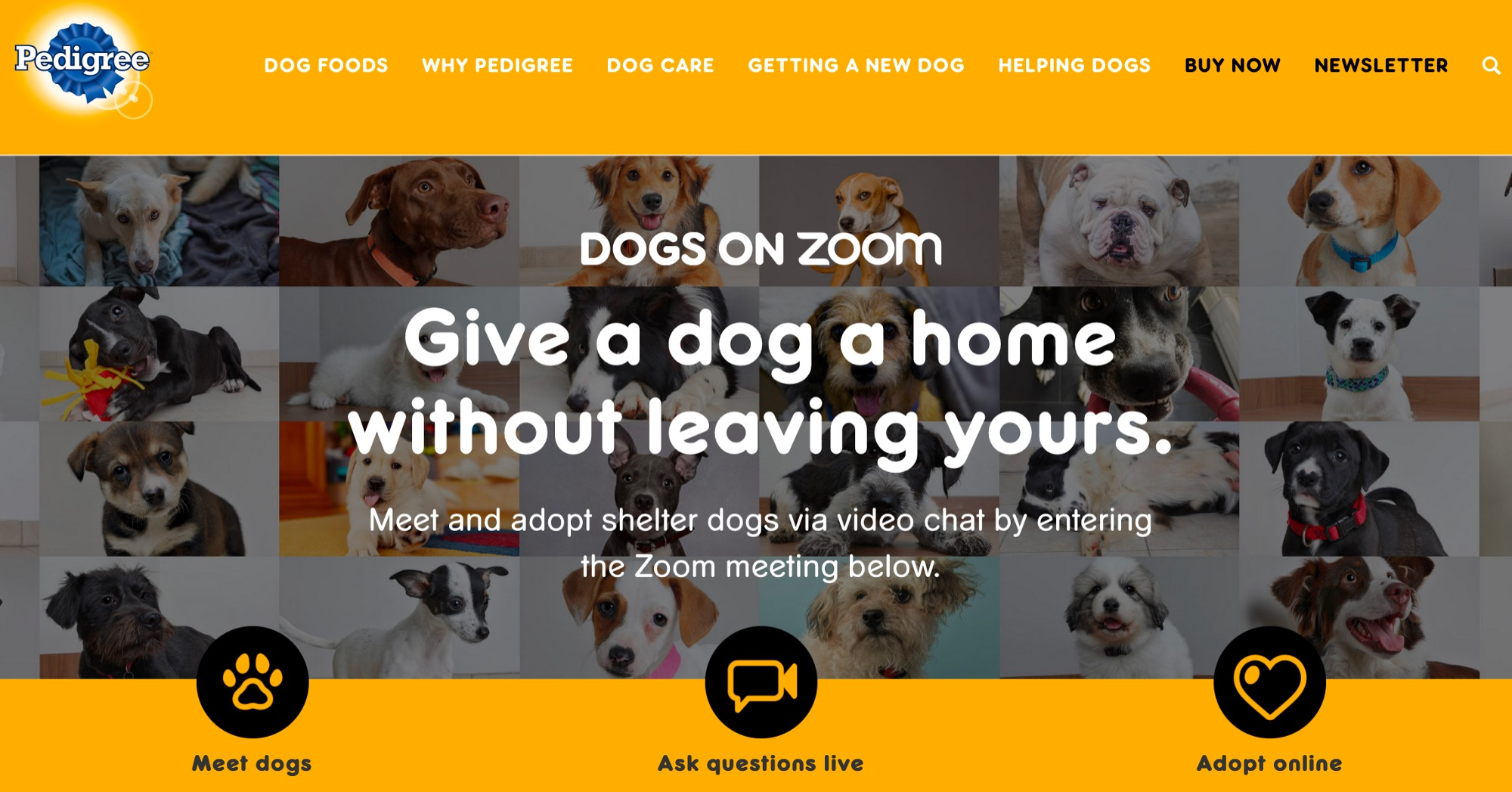 Adoption by Zoom