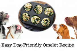 Easy Dog Friendly Omelet Recipe