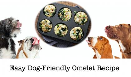 Easy Dog Friendly Omelet Recipe