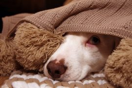 Help Your Dog with Fireworks Fear
