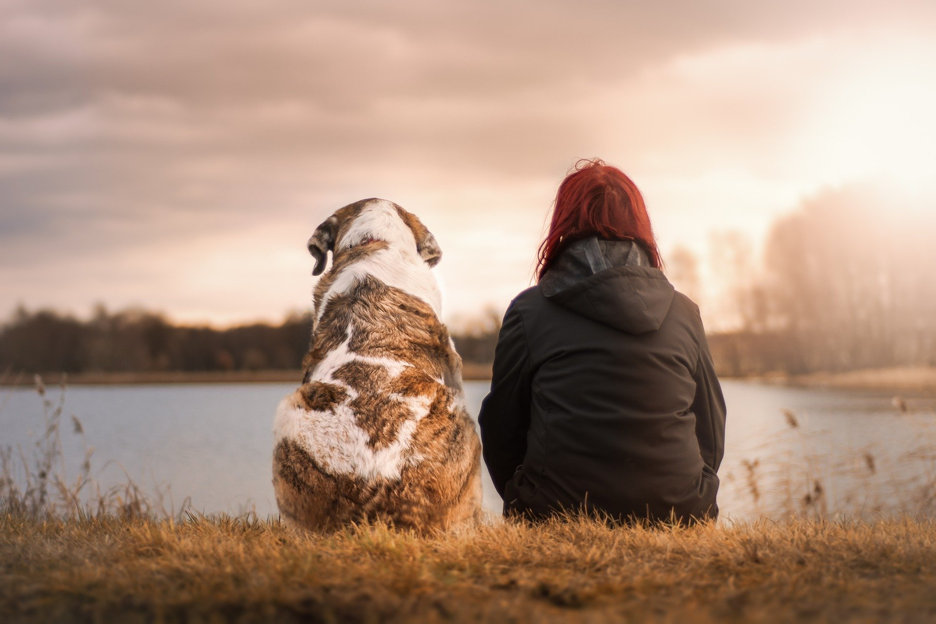 How Dogs Help Us Heal
